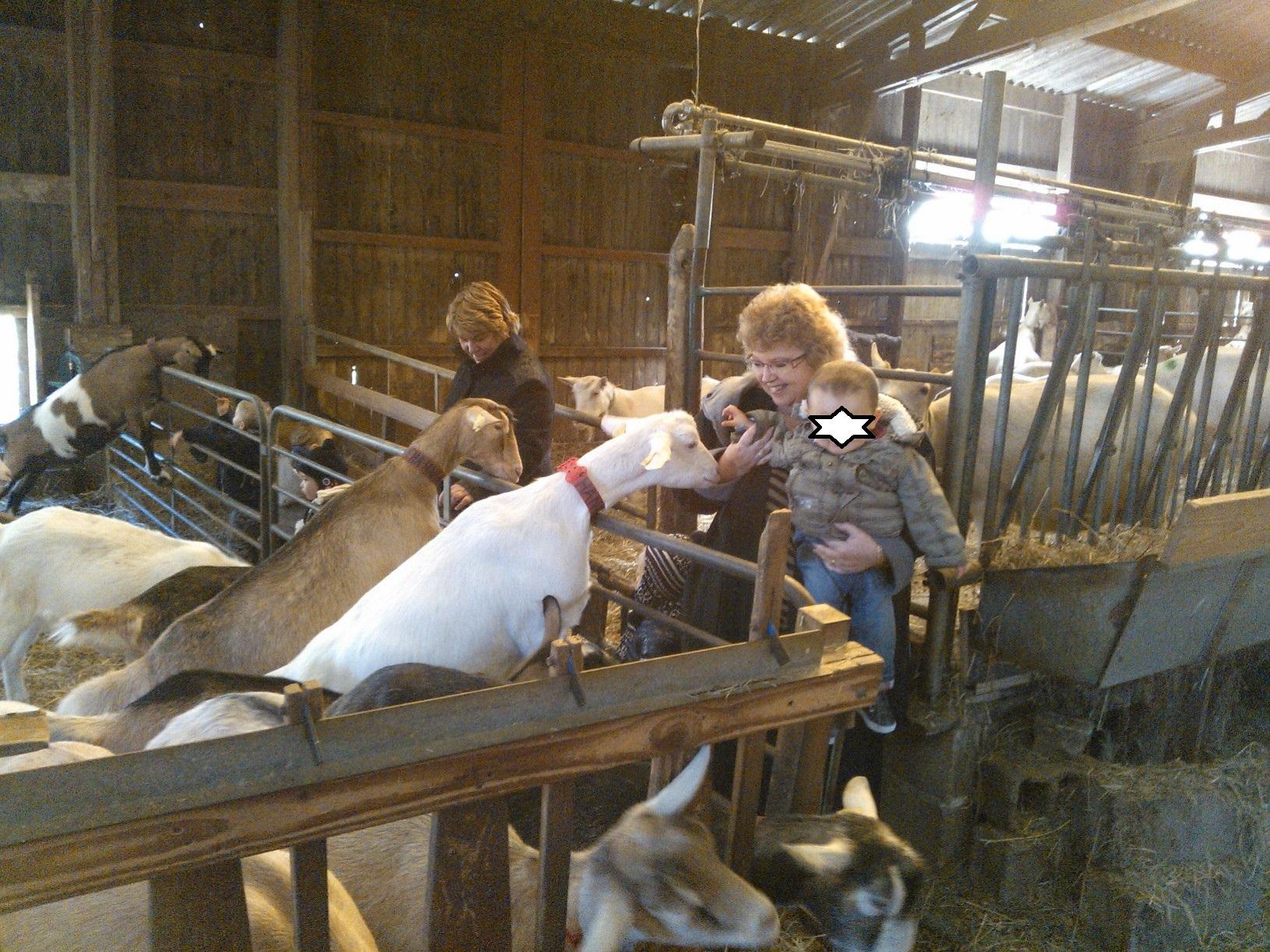 2012 visite la ch vrerie de rambouillet aamcr for Visite de rambouillet